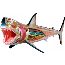 4D Vision - Great White Shark Anatomy Model - 3D Anatomic Puzzles