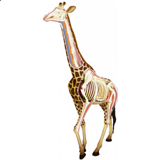 4D Vision - Giraffe Anatomy Model - Games & Toys