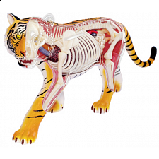 4D Vision - Tiger Anatomy Model - 3D Anatomic Puzzles