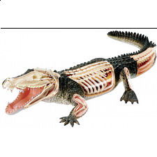 4D Vision - Crocodile Anatomy Model - 3D Anatomic Puzzles