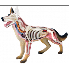 4D Vision - Dog Anatomy Model - 3D Anatomic Puzzles