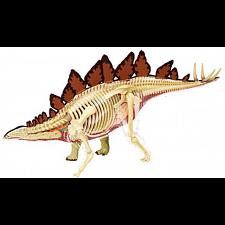 4D Vision - Stegosaurus Anatomy Model -