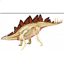 4D Vision - Stegosaurus Anatomy Model - Games & Toys