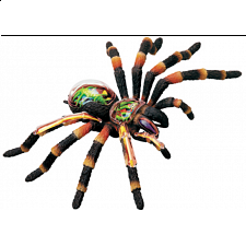 4D Vision - Tarantula Spider Anatomy Model