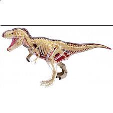 4D Vision - T-Rex Anatomy Model