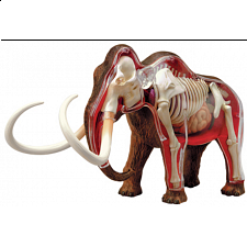 4D Vision - Woolly Mammoth Anatomy Model - 3D Anatomic Puzzles