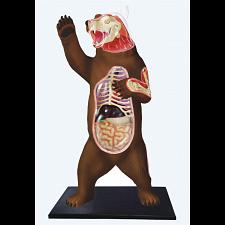 4D Vision - Brown Bear Anatomy Model -