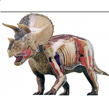 4D Vision - Deluxe Triceratops Anatomy Model - Games & Toys