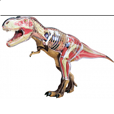4D Vision - Deluxe Tyrannosaurus Rex Anatomy Model - Games & Toys