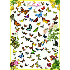 Butterflies - Search Results