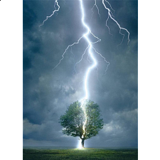Lightning Striking Tree - Search Results