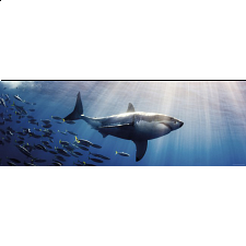 AVH Panorama: White Shark - Panoramics