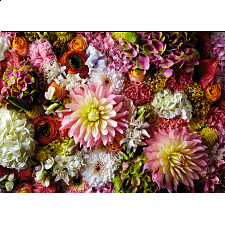 Flower Show: Airy Dahlia - 1000 Pieces