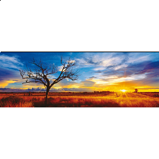 Panorama: Desert Oak at Sunset - Panoramics