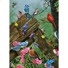 Birds of the Forest -