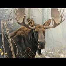 Bull Moose - Large Piece -