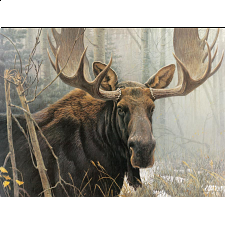 Bull Moose - 500-999 Pieces