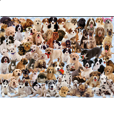 Dog's Galore! - 1000 Pieces
