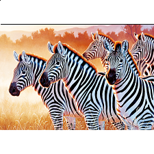 Zebras - 1001 - 5000 Pieces