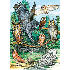 North American Owls - Tray Puzzle - 1-100 Pieces