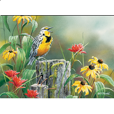 Meadowlark Morning - Search Results