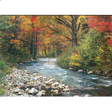 Forest Stream -
