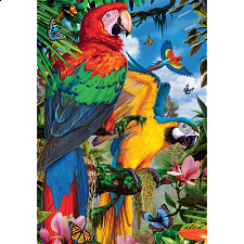 Pretty Parrots - Search Results