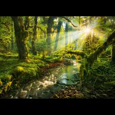 Magic Forests: Spirit Garden - 1000 Pieces