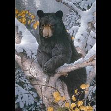 Black Bear - 1000 Pieces