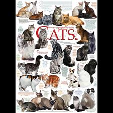 Cat Quotes -