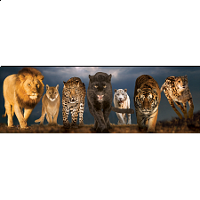 Big Cats: Panoramic Puzzle - Panoramics
