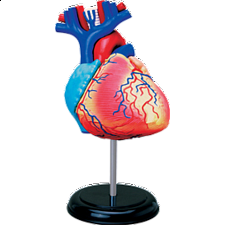 4D Human Anatomy - Heart - New Items