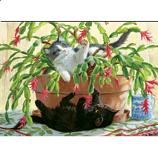 Cactus Kitties - Search Results