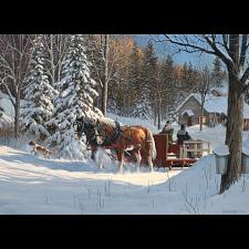 Sugar Shack Horses -