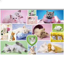 Cuddly Cats - Search Results