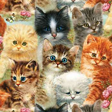 A Pile of Kittens - 1000 Pieces