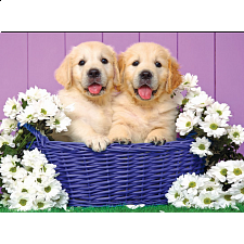 Colorluxe: Puppy Basket - 1-100 Pieces
