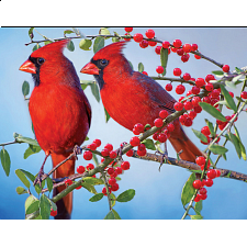 Colorluxe: Pretty Red Cardinals - 1-100 Pieces