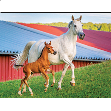 Colorluxe: Mommy and Baby Farm Horses - Jigsaws