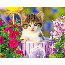 Colorluxe: Tabby Kitten in the Garden - Jigsaws
