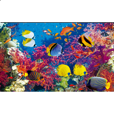 Colorluxe: Coral Fish Paradise - 500-999 Pieces