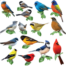 Songbirds: 15 Mini Shaped Puzzles - 500-999 Pieces