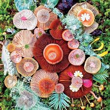 Mushrooms: Jawbone - Jigsaws