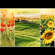 Sunny Tuscany - Specials