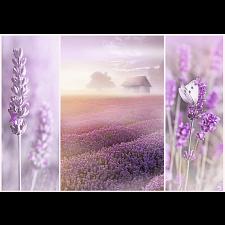 Lavender Field - Specials