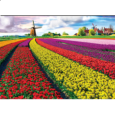 Tulip Fields - Search Results
