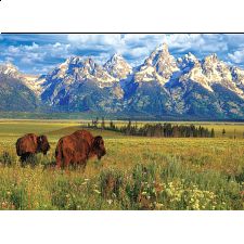 Grand Teton National Park - Search Results