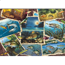 Fish Pics - 1000 Pieces