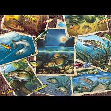 Fish Pics - New Items