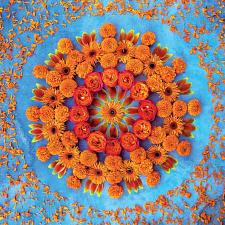 Danmala: Orange -